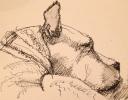 Bear Ink 4x5$75 Archival print $50)