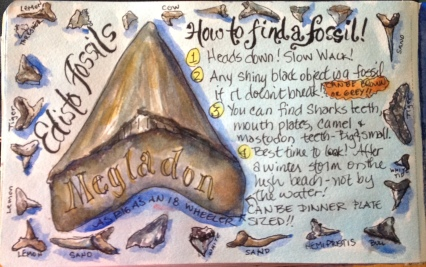 Sharks Teeth (Print will be available)
