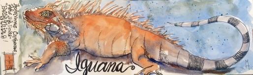 Iguana Archival Print6x16