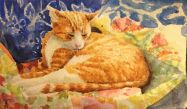 Tom loves a quilt and fabric.  You can usually find him on or under a quilt! For Sale!