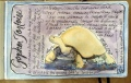 Gopher Tortoise(Archival print $50)