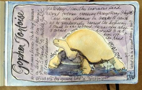 Gopher Tortoise(Archival print $50)